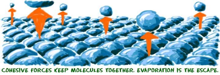 Chem4Kids com: Matter: Evaporation